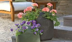 Easy And Beautiful Bonsai Ideas