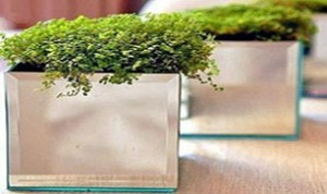 Easy And Beautiful Bonsai