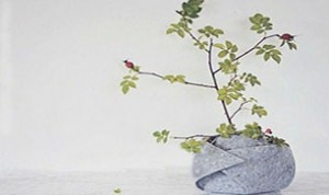 Great Bonsai Idea