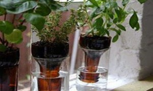 Diy Beautiful Bottle Bonsai