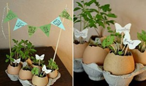 Diy Cute Egg Bonsai