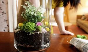 Diy Jar Bonsai