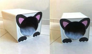 Diy Cute Cat