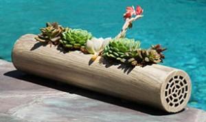 Great Bonsai Idea