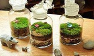 Cool Bonsai Ideas
